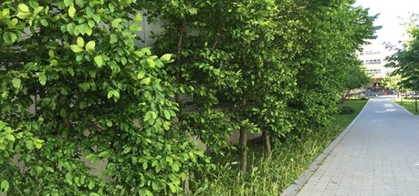 The right vegetation can contribute to a more forgiving traffic environment