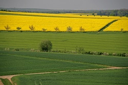 A biomass boost to Europe's bioeconomy